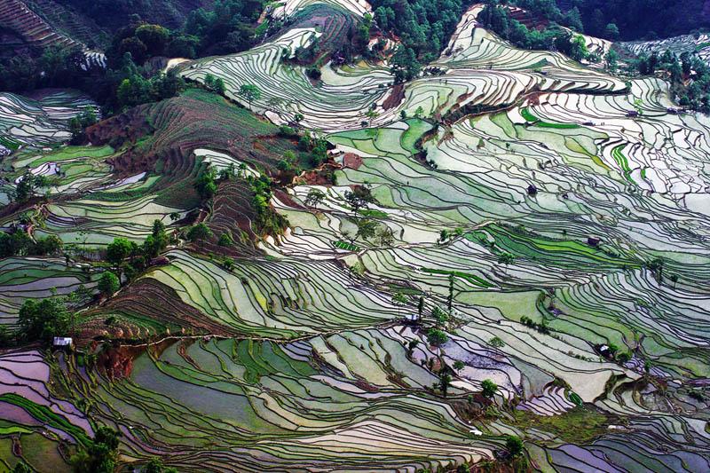 Terrazas De Arroz Cultural Planet